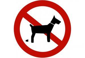 chien-tt-width-604-height-410-attachment_id-274218